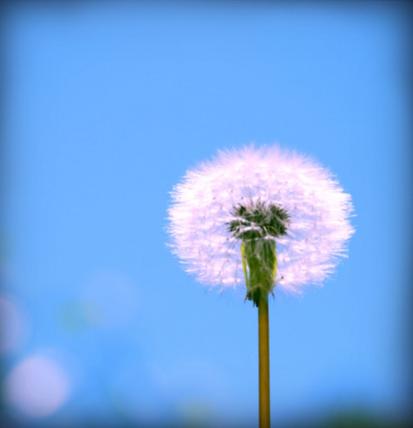 Make A Wish Myvirtualflower
