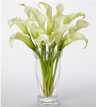 Vera Wang Calla Lilies